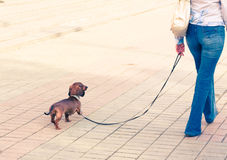 гулять улицы девушки собаки Стоковое Изображение RF