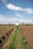 гулять человека поля фермы Стоковое Изображение RF