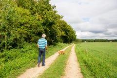 гулять человека собаки пожилой стоковые изображения
