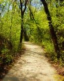 Гуляя путь Стоковая Фотография RF