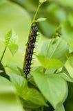 Гусеница лист осени Стоковая Фотография RF