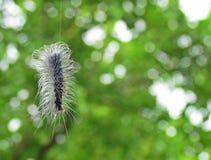 гусеница медведя шерстистая Стоковые Фото