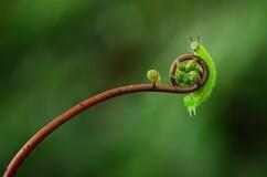 гусеница милая стоковые фотографии rf