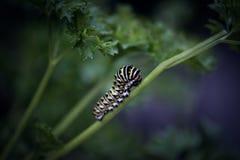 Гусеница на зеленом стержне Стоковые Фото