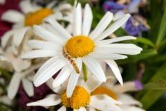 Гусеница на цветке Стоковые Фотографии RF