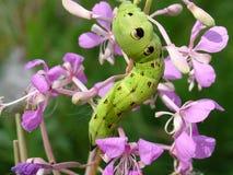 гусеница цветет зеленый цвет Стоковые Изображения