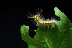 гусеница шерстистая Стоковые Фото