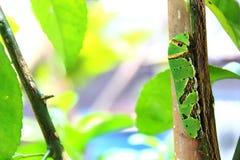 Гусеница Стоковое Фото