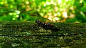 Гусеница стоковая фотография rf