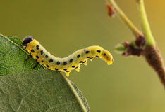 Гусеница. Стоковые Фото