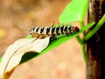 Гусеница Стоковое фото RF
