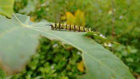Гусеница Стоковые Фото