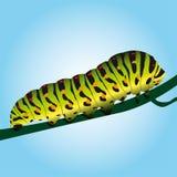 гусеница Стоковые Изображения