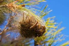 Гусеницы и личинки Стоковые Изображения