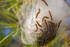 Гусеницы и личинки Стоковые Фото