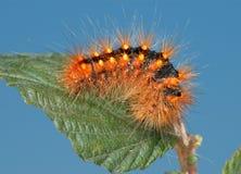 гусеницы красный цвет fiery стоковая фотография rf