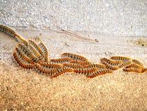 Гусеницы на пути Стоковая Фотография