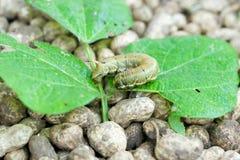 гусеницы Стоковое Изображение