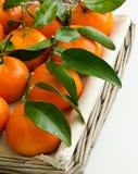 густолиственное clementines свежее Стоковая Фотография RF