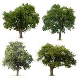 Густолиственные зеленые деревья стоковые изображения rf