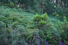 Густолиственный лес евкалипта в горах Галиции Ландшафт перемещения ботанический Стоковая Фотография RF