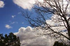 Густолиственный лес под голубым небом Стоковая Фотография