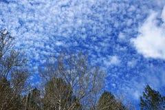 Густолиственный лес под голубым небом Стоковые Фотографии RF
