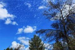 Густолиственный лес под голубым небом Стоковое Фото