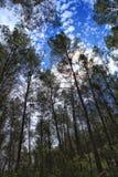 Густолиственный лес под голубым небом Стоковое Изображение RF