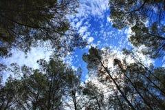 Густолиственный лес под голубым небом Стоковое Изображение