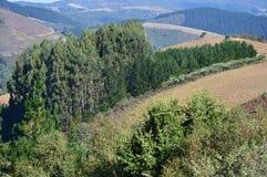 Густолиственный лес сосен в горах Галиции Ландшафт перемещения ботанический Стоковые Изображения RF