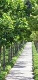 густолиственный тротуар Стоковая Фотография