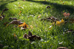 Густолиственная лужайка Стоковое Изображение RF