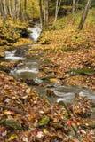 Густолиственный поток леса стоковое изображение