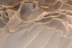 гусына Канады Стоковые Фото