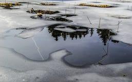 Гусына на льде стоковое фото rf