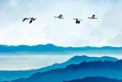 Гусыни летая против предпосылки голубого неба Стоковые Фотографии RF