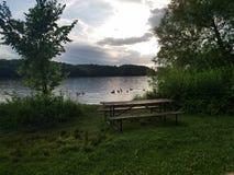 Гусыни на воде Стоковое Фото