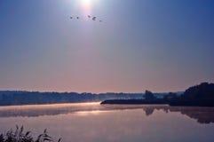 Гусыни на пруде Стоковое Изображение