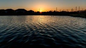2 гусыни плавая в пруде как солнце поднимают Стоковое фото RF