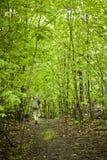 Гулять в древесины Стоковое Изображение RF
