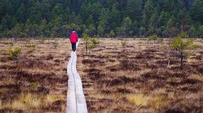 гулять путя деревянный Стоковые Фото