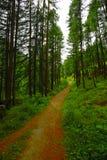 гулять путя пущи Стоковое Изображение