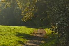 гулять путя пущи Стоковое Фото