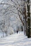 Гуляющ собака в зиме стоковое фото