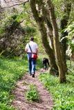 Гуляющ собака Стоковые Фотографии RF
