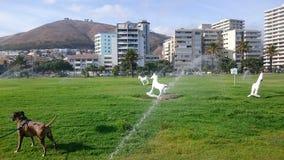 Гуляющ собака Стоковые Изображения RF