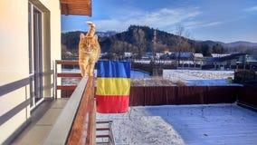 Гуляя кот Стоковая Фотография