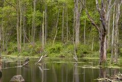 гуляя древесины стоковое изображение rf