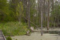 гуляя древесины стоковые фото